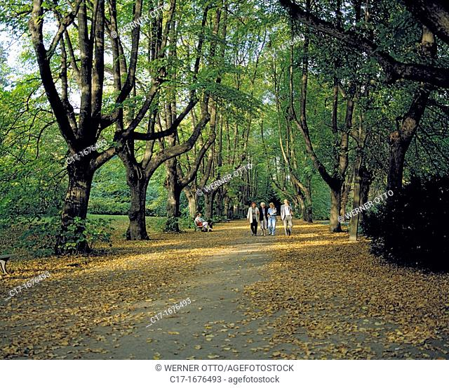 Germany, Dortmund, Ruhr area, Westphalia, North Rhine-Westphalia, NRW, Dortmund-Bruenninghausen, Botanical Garden Rombergpark, Romberg Park, landscape gardens