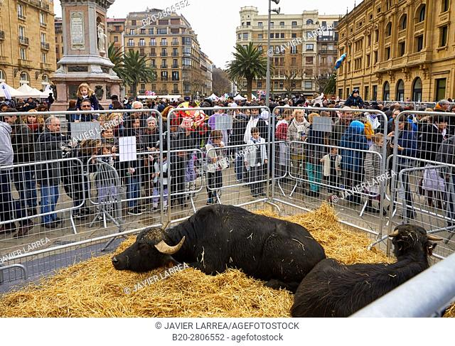 Cattle. Feria de Santo Tomás, The feast of St. Thomas takes place on December 21. During this day San Sebastián is transformed into a rural market