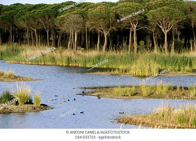 Parque Nacional de Doñana. Huelva province. Andalusia , Spain