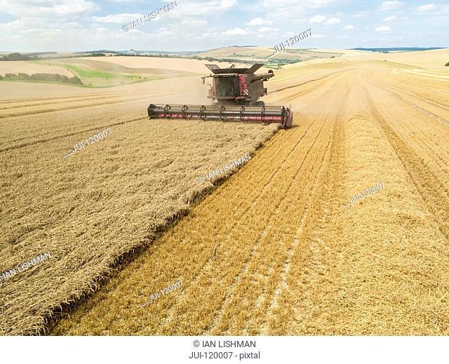 Harvest aerial overhead of combine harvester cutting summer wheat field crop on farm