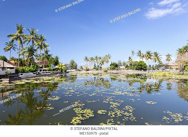 Lotus water lilies growing in the lagoon at Candidasa, Bali, Indonesia