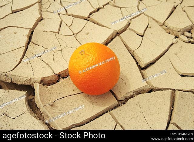 Juicy orange and drought