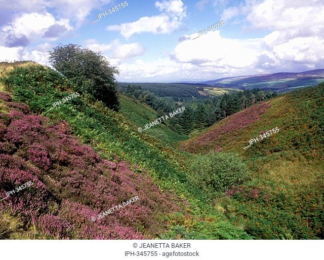 View over late summer heather of a lovely valley seen from the B4391 mountain road between Bala and Llangynog