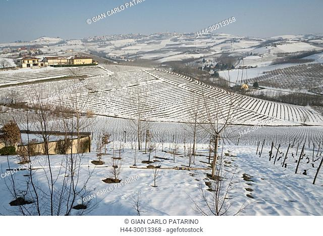 Italy, Piedmont, Vineyards, Langhe, panorama of vineyards of Piedmont Langhe-Roero and Monferrato in the World Heritage List of UNESCO View of vineyards in the...