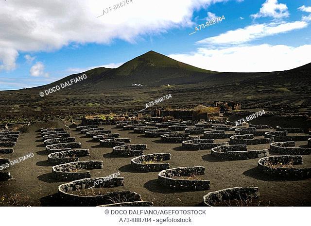 Vineyards at La Geria, Lanzarote. Canary islands, Spain