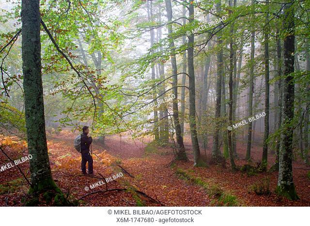 Beechwood in autumn  Gorbeia Natural Park  Alava, Spain