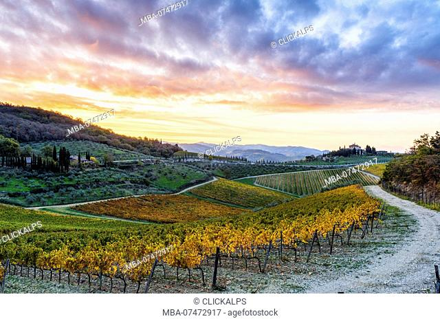 Farmhouse surrounded by vineyards at sunrise, Gaiole in Chianti, Siena province, Tuscany, Italy