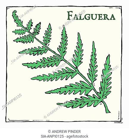 Fern (Falguera), green plant with leafs