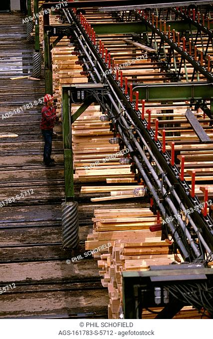 Lumber Industry - A worker inspects newly cut lumber at a saw mill / WA