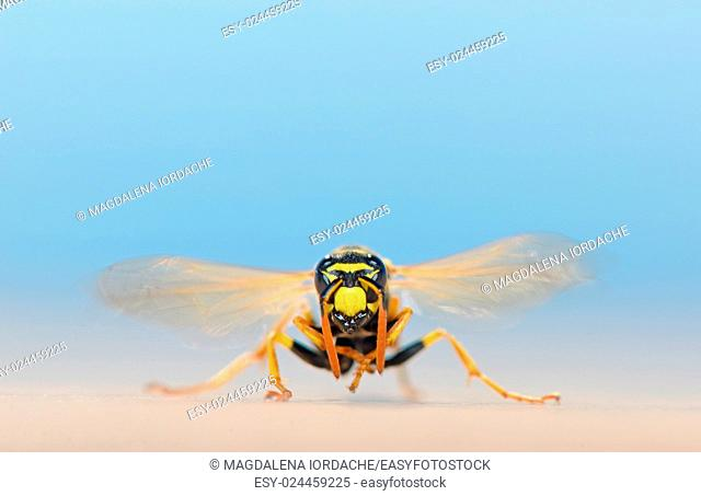 macro wasp in nature shoot on summer sand