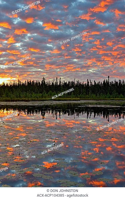 Dawn skies reflected in a beaver pond, Wood Buffalo National Park, Alberta, Canada