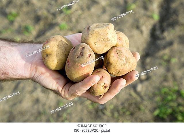 Man holding potatoes