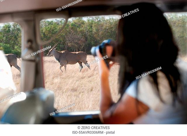 Woman photographing wildlife through vehicle window, Stellenbosch, South Africa