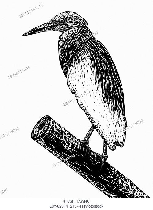 Pondheron sketch