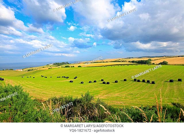 Beautiful summer farmland landscape , Scotland