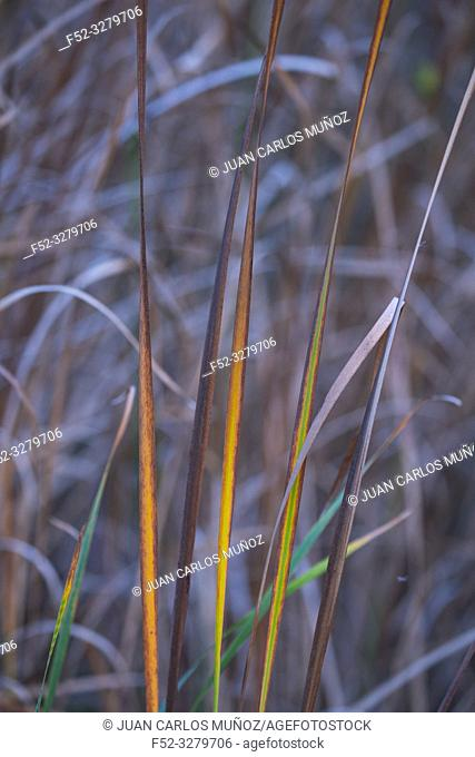 Flora, Wetland detail, Danube Delta, UNESCO WORLD HERITAGE, Tulcea County, Romania, Europe