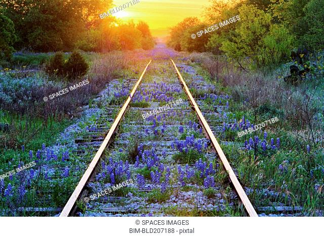 Blue Bonnets on Railroad Tracks