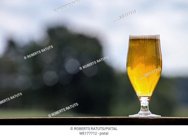 Glass of light beer with foam and bubbles on wooden table on nature background. Beer is an alcoholic drink made from yeast-fermented malt flavoured with hops