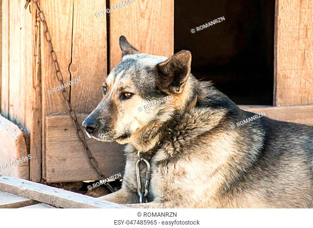 Dog on the chain rests in the shade of the kennel