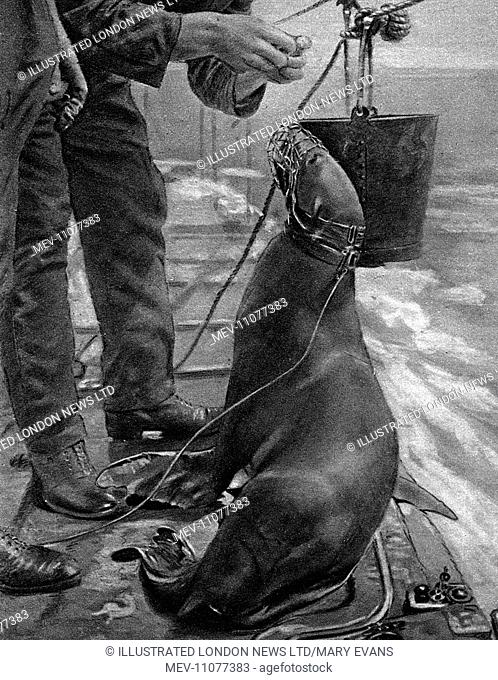 A remarkable naval experiment came to light after the war was over, deemed so unlikely that when The Illustrated London News first heard of it