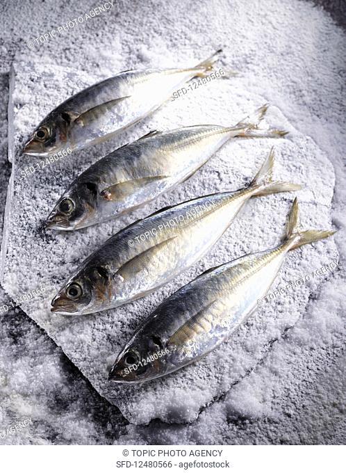 Mackerels on salt