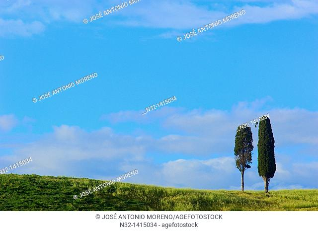 Fields and cypress trees, Tuscany landscape, Val d'Orcia, UNESCO world heritage site, Pienza, Siena Province, Tuscany, Italy