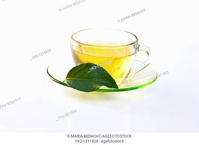Cup of green tea with leaf of Camellia sinensis tree on white background
