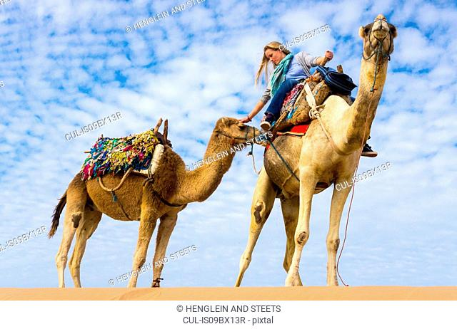 Woman on camel ride stroking camel