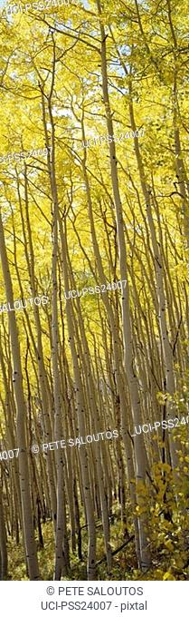 Panoramic view of trees on hill in autumn