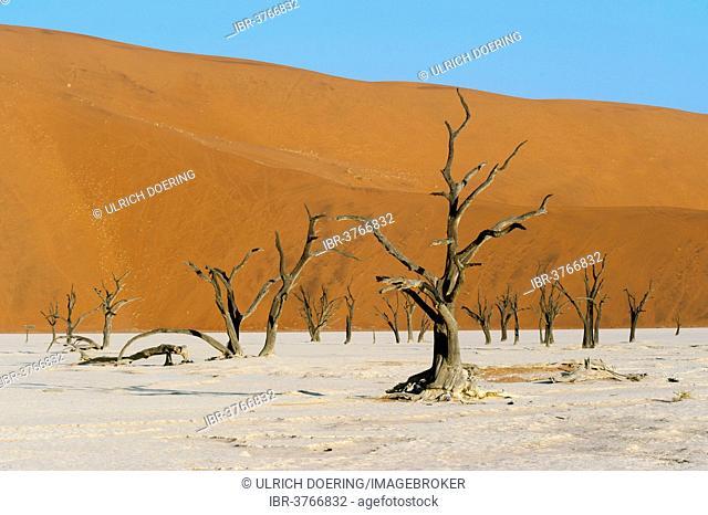 Dead acacia trees and red sand dunes, Dead Vlei, Sossusvlei, Namib Desert, Namib Naukluft Park, Khomas Region, Namibia