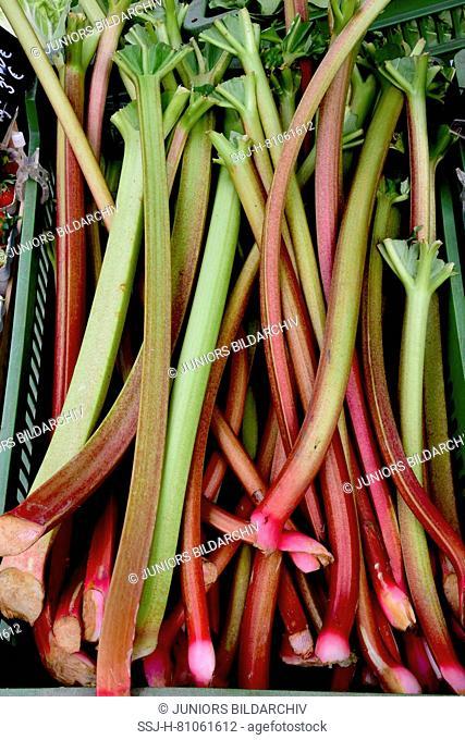 Market Stall offering Garden Rhubarb