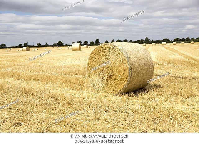 Round straw bales in flat field with overhead cumulus cloud, Sutton, Suffolk, England, UK