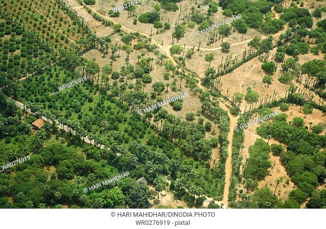 Aerial view of land surrounded by tree , Andhra Pradesh , India