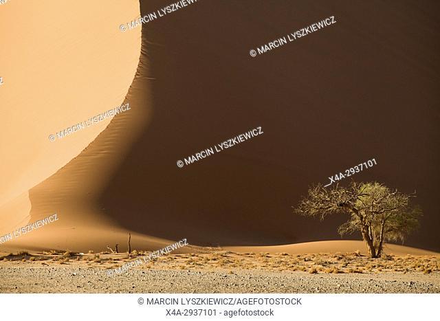 A dune and a tree, Namib desert near Soussuvlei, Namib-Naukluft National Park, Namibia