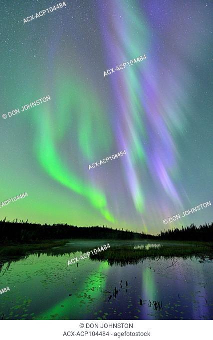 Aurora borealis (Northern Lights) over a beaver pond, Yellowknife, Northwest Territories, Canada