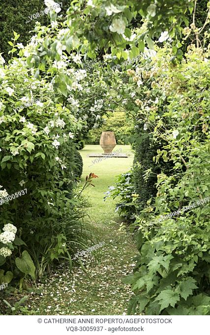 Terracotta urn vista through a fragrant archway of orange blossom flowers in the grounds of The Grange, Frampton on Severn, the Cotswolds, England