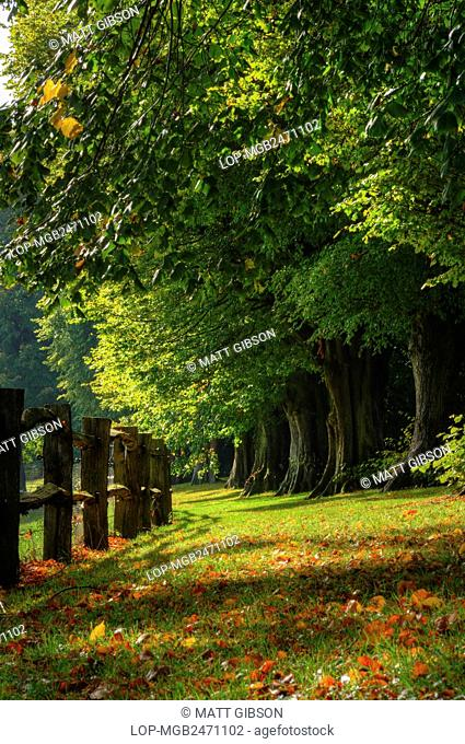 England, West Sussex, Crawley. Autumn tree lined avenue with vibrant colours