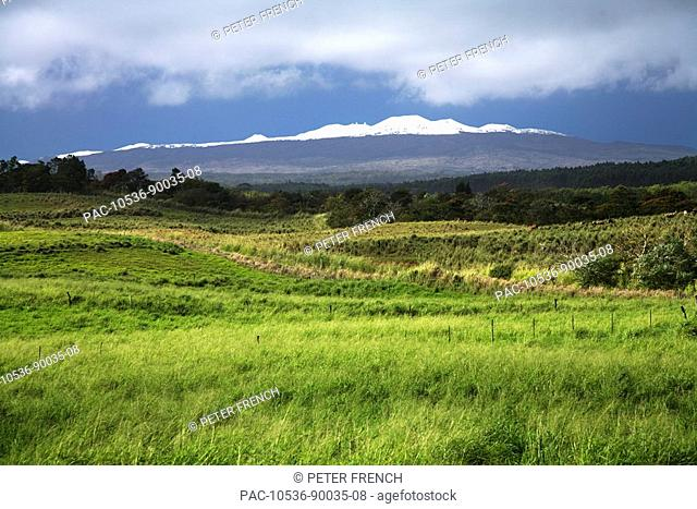 Hawaii, Big Island, North Kohala, View of Mauna Kea from green hillside