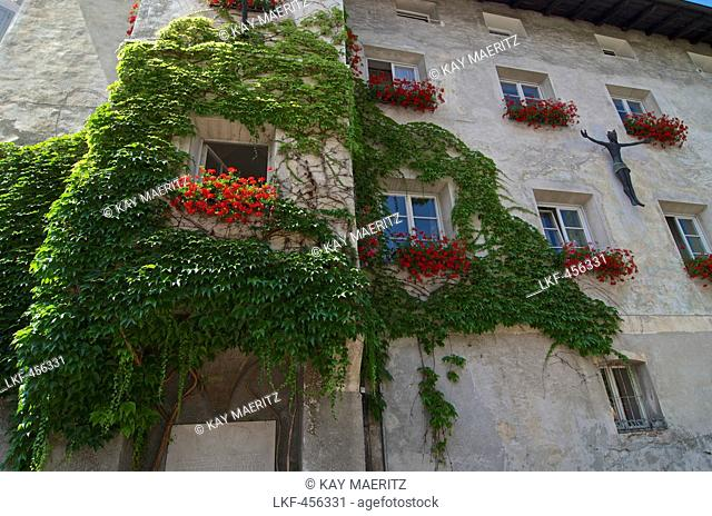 Parthenocissus tricuspidata climbing up a house wall, with germaniums in the window boxes, Bressone, Val di'Isarco, Dolomite Alps, South Tyrol, Upper Adige