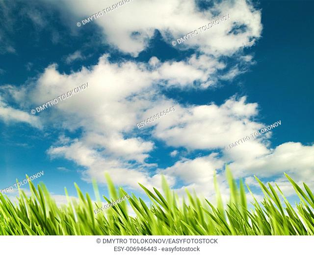 Abstract natural backgrounds with green meadow under bright summer sun