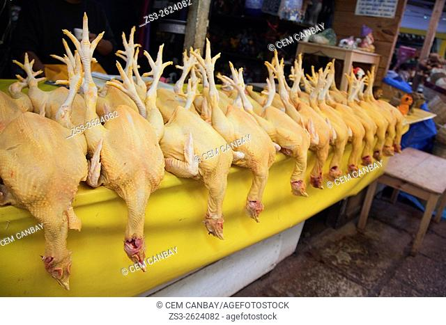 Chickens for sale at the market of San Cristobal de las Casas, Chiapas State, Mexico, North America