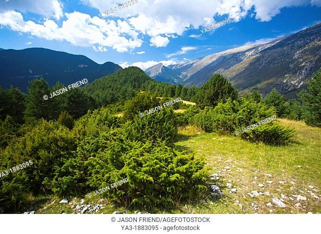 Spain, Catalonia, Pyrenees, Gósol  Trees high in the Pyrenees mountains near Gósol and the Vall De Josa