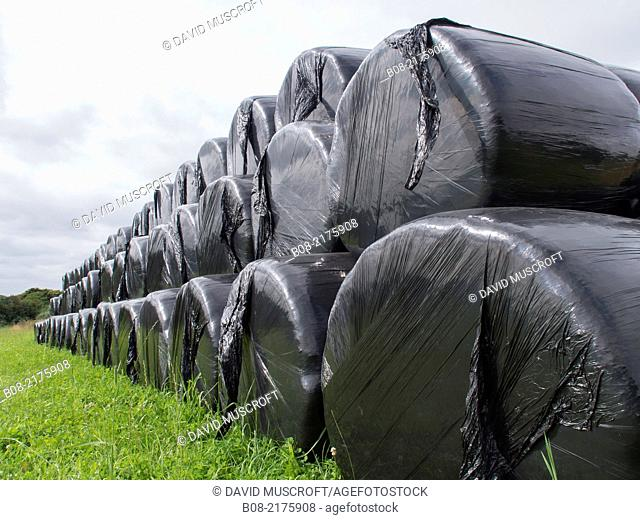 plastic packaged hay bales,derbyshire,uk