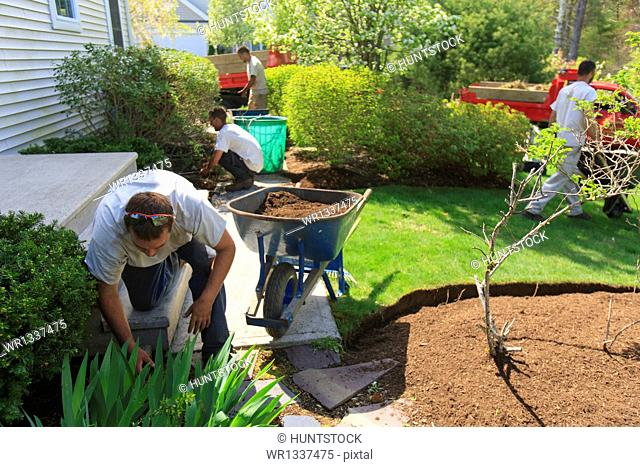 Landscapers putting mulch from wheelbarrows into a home flower garden