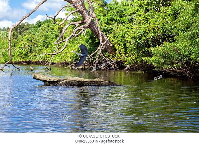Everglades, Fort Lauderdale, Florida, USA