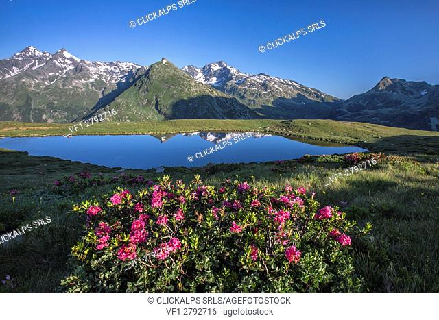 Rhododendrons surround Mount Cardine reflected in Lake Andossi at sunrise Chiavenna Valley Valtellina Lombardy Italy Europe