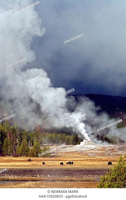 Yellowstone, national park, Wyoming, upper geyser basin, castle geyser, geyser, hot spring, nature, USA, United States, America