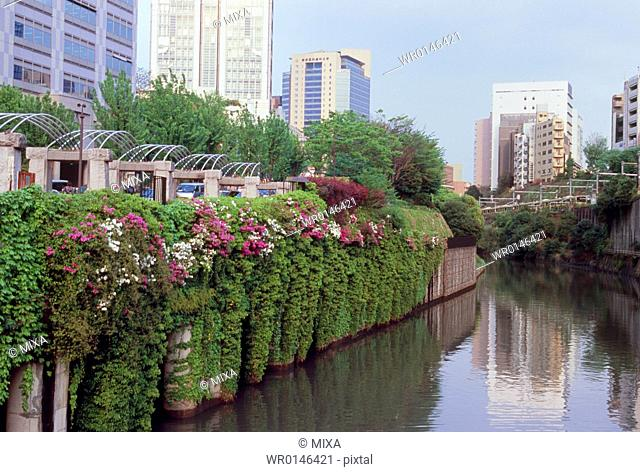 Kanda River, Bunkyo, Tokyo, Japan