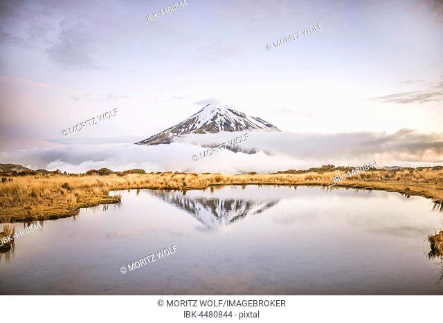 Reflection in Pouakai Tarn, stratovolcano Mount Taranaki or Mount Egmont at dusk, Egmont National Park, Taranaki, North Island, New Zealand