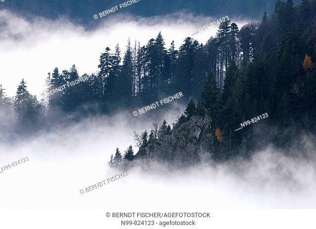 Mist cover in Vosges mountains, autumn, lower mountain ranges, slopes with pine forest at the Hohneck massif, Vosges, France